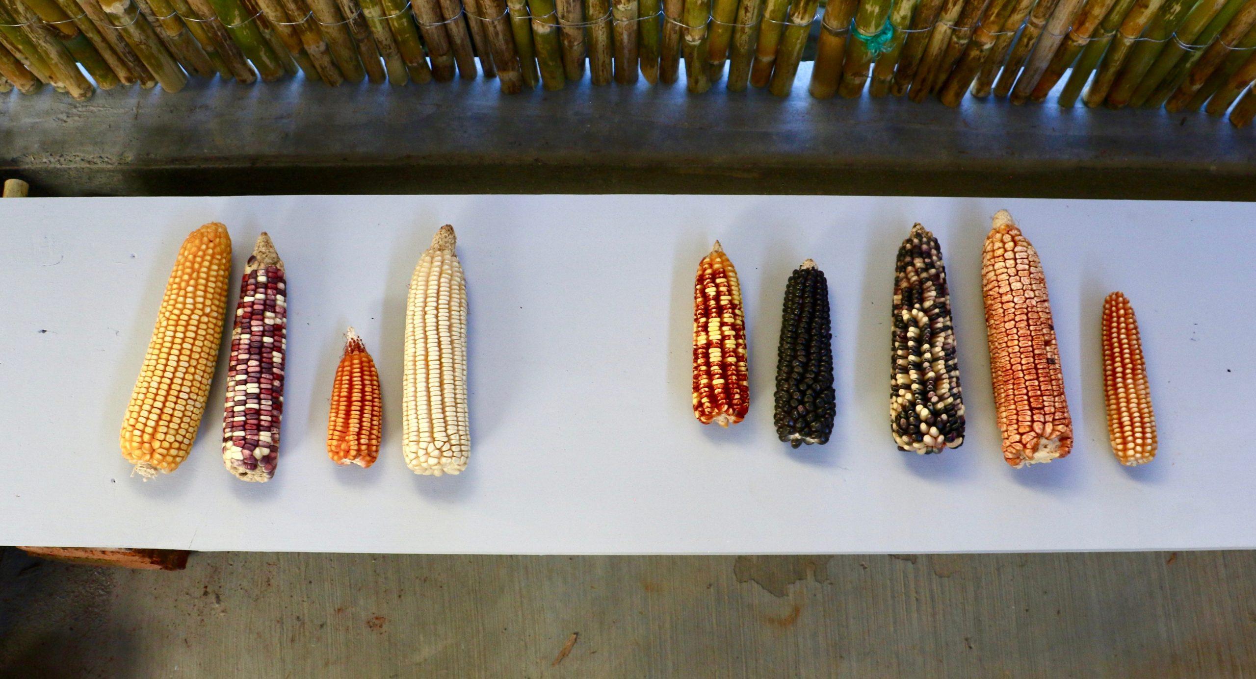 """""""No Maize Es No Pais"""": Accounting as Artistic Practice"""