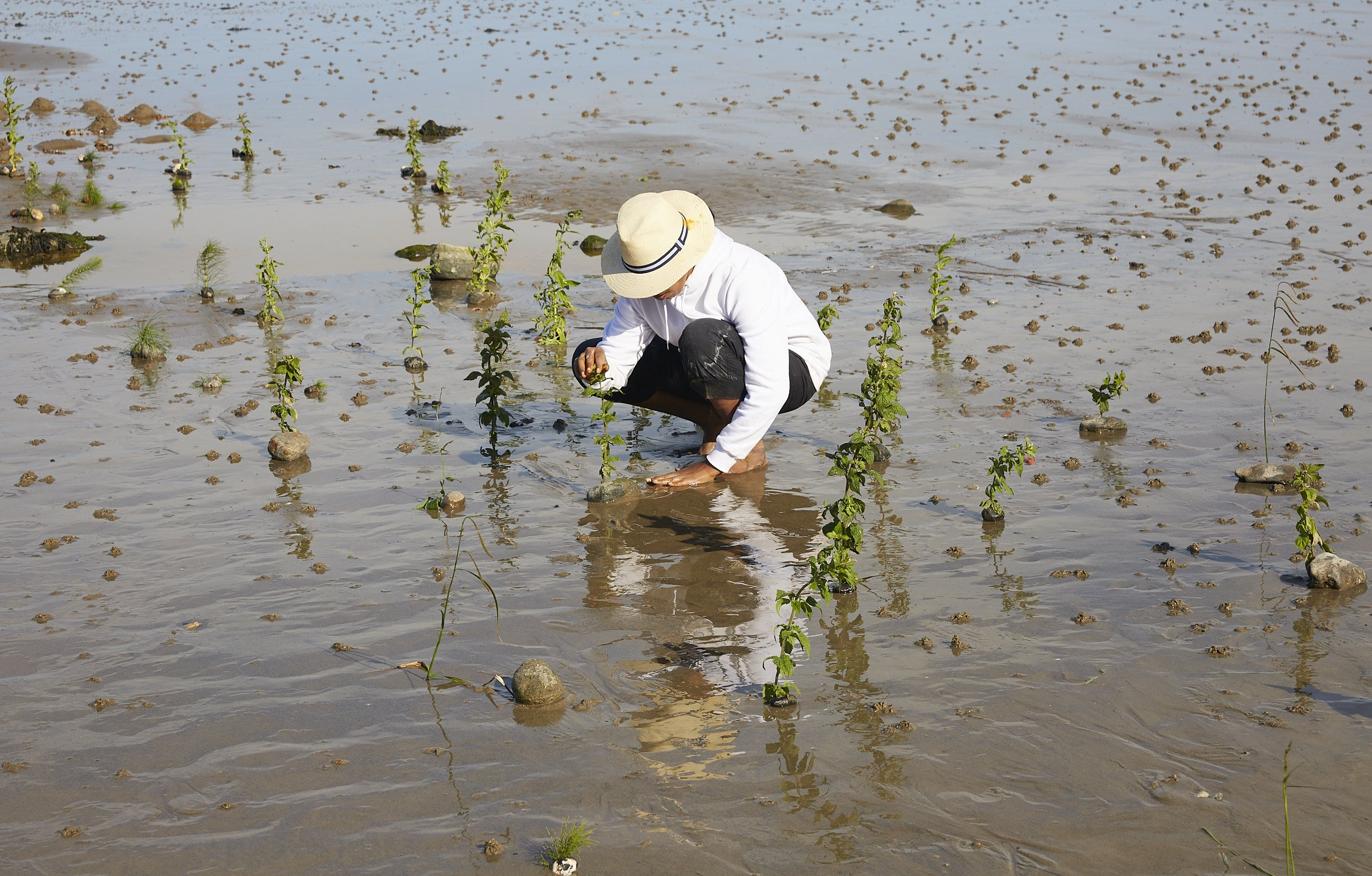 The artist kneeling on the wet shoreline, with one hand at the top of a plant, and the other hand pressed to the wet sand.
