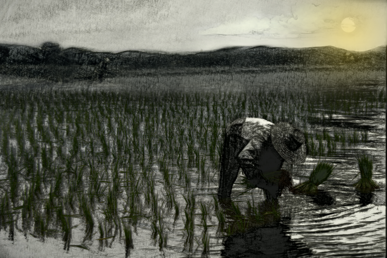 man planting rice in paddy
