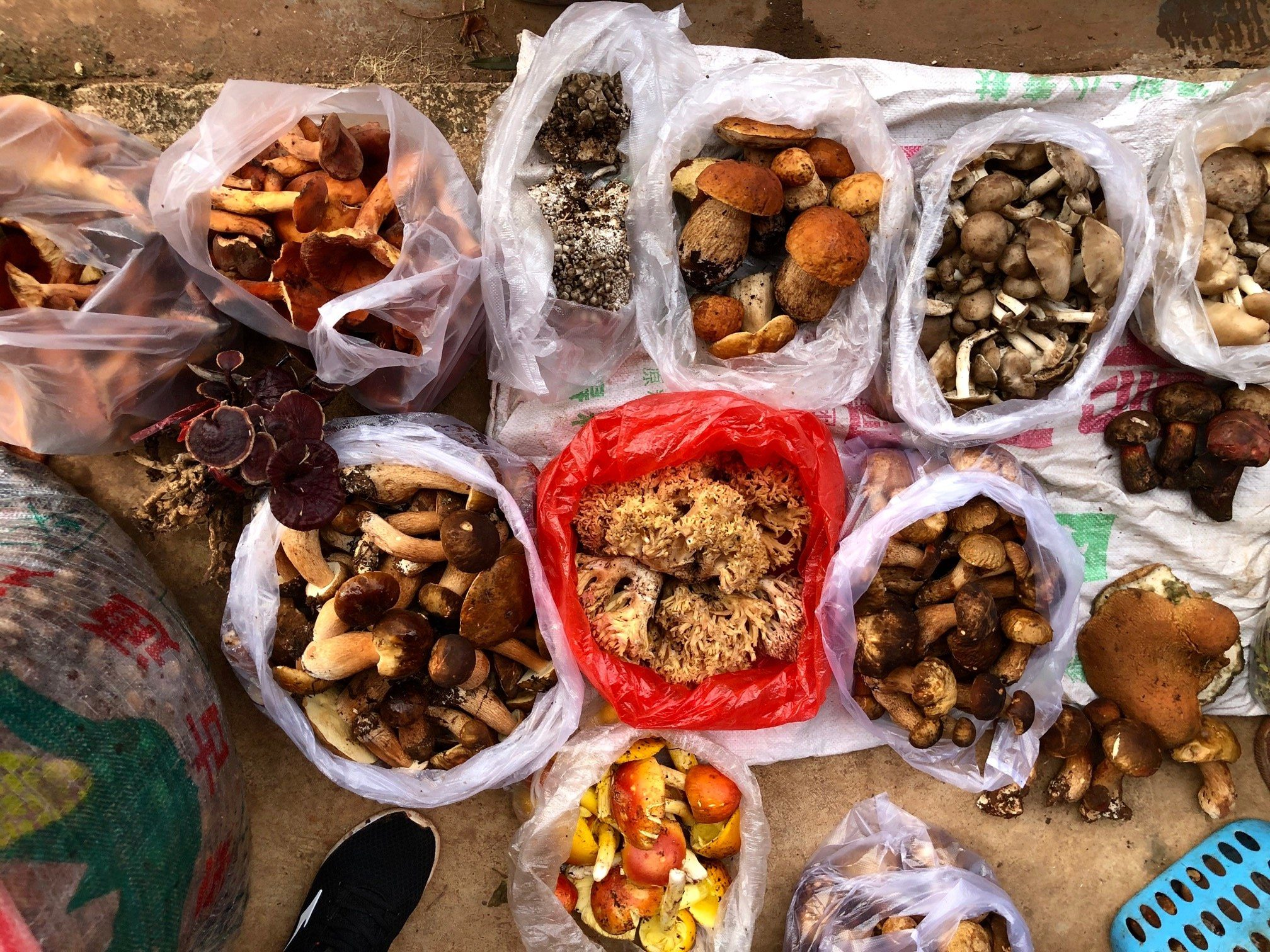 a dozen vairties of colorful mushrooms bagged for sale